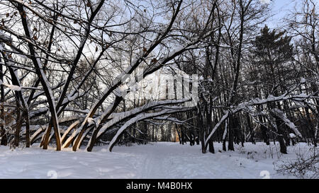 Tree trunks covered with snow in a city park - Stock Photo