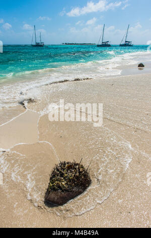 Driftwood lying on a white sand beach,Tobago Cays,St. Vincent and the Grenadines,Caribbean - Stock Photo