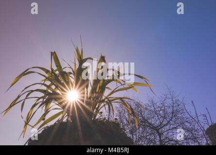 Sun rays shining through the plant leaves - Stock Photo