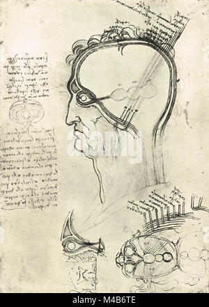 Sections of a Man's head, showing the anatomy of the eye, drawn by Leonardo Da Vinci, circa 1500 - Stock Photo