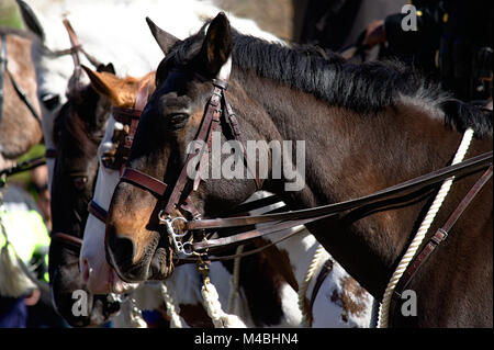US Park Police Mounted Horse Patrol during Cherry Blossom Parade 2017 in Washington DC - Stock Photo