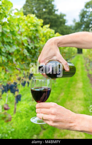 Two female arms pouring wine in fall vineyard - Stock Photo
