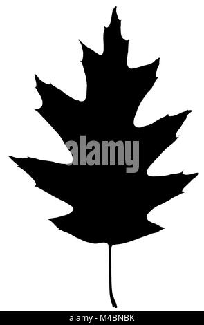 Silhouette leaf of oak, isolated on white background - Stock Photo