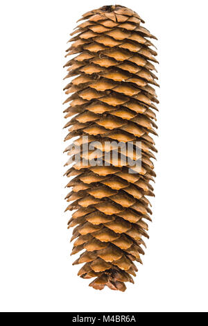 Beautiful pine cone isolated on a white background - Stock Photo