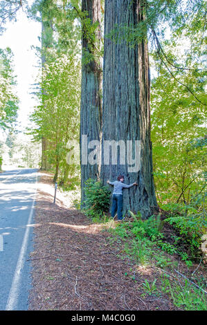 a mature woman standing among the towering sequoias in Northern California