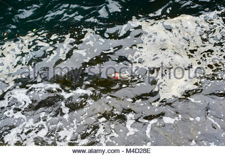 An empty plastic Coca Cola bottle, surrounded by water and foam; floating  in Sydney Harbour. - Stock Photo