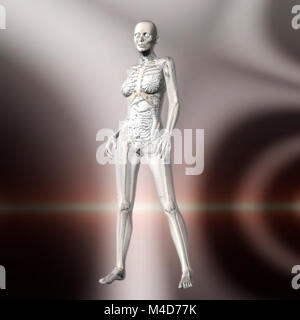 Digital 3D Rendering of the female human Anatomy - Stock Photo