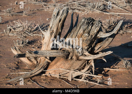 Old dead wooden tree trunk in the desert - Stock Photo