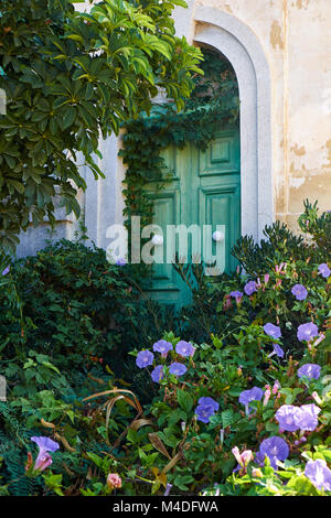 Ivy-covered green door in the wall of old house. Malta