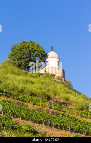 Vineyard with different sorts of wine with in summer - Stock Photo