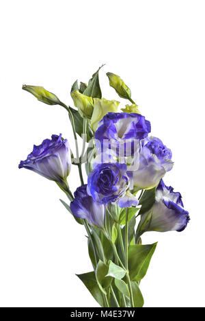 Bouquet of Eustoma flowers isolated on white - Stock Photo