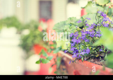 Street cafe flowers and herbs decor concept. - Stock Photo