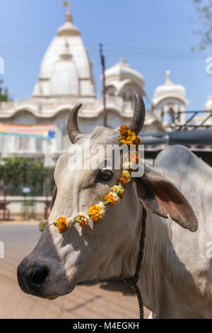 Portrait of a cow with Sri Krishna-Balaram Temple on backround. Cow is a sacred animal in hinduism. - Stock Photo