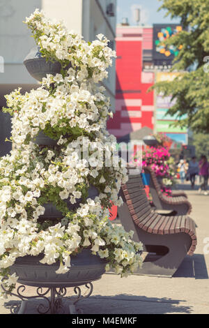 Street flowers and herbs decor concept - Stock Photo