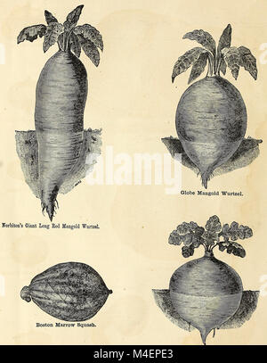 Annual circular and retail catalogue of choice vegetable and flower seeds (1871) (18238013569) - Stock Photo