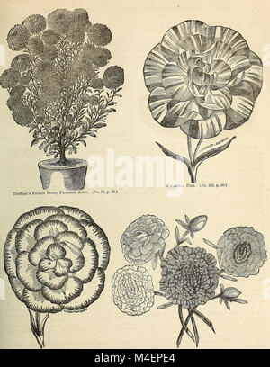 Annual circular and retail catalogue of choice vegetable and flower seeds (1872) (18236411118) - Stock Photo