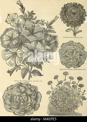Annual circular and retail catalogue of choice vegetable and flower seeds (1872) (18424218805) - Stock Photo