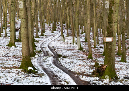 Wales, UK. A track winding through a forest in winter with a sign reading 'private - no public right of way' - Stock Photo