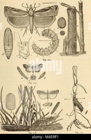 Annual report, including a report of the insects of New Jersey, 1909 (1910) (18427781142) Stock Photo