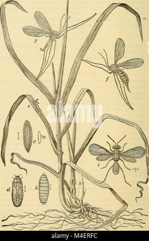 Annual report, including a report of the insects of New Jersey, 1909 (1910) (18433900641) Stock Photo