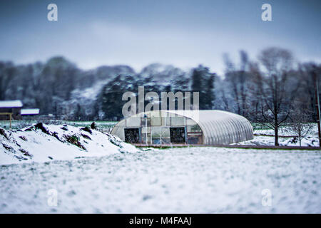 peach tree farm during spring snow with blossoms - Stock Photo