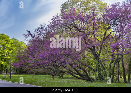 in a park - Stock Photo