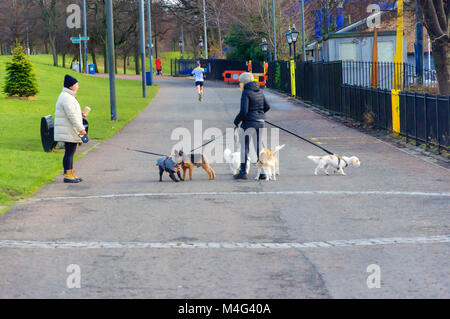 Glasgow, Scotland, UK. 16th February, 2018. UK Weather.  Dog walker enjoying the cold, dry afternoon in Glasgow. - Stock Photo