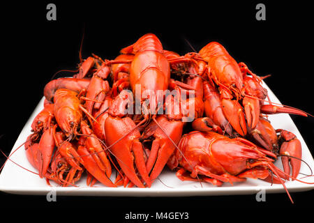 Cooked American signal crayfish, Pacifastacus leniusculus, on a black background Dorset England UK GB - Stock Photo