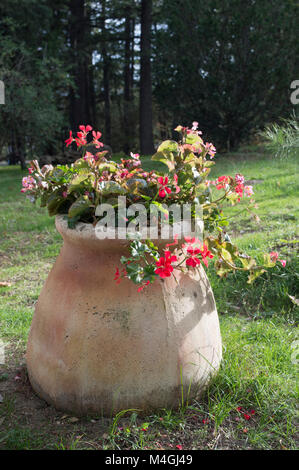 Flower in pot - Stock Photo