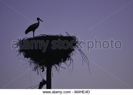 Stork nests and habitat - Stock Photo