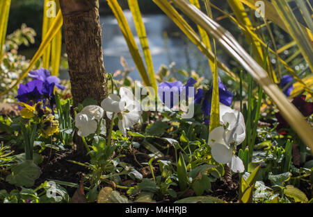 Spring flowers on a bright sunny day - Stock Photo