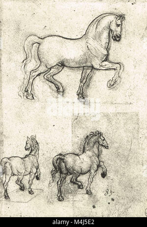 Three studies of Horses, equine Anatomical drawing, drawn by Leonardo Da Vinci, 1452-1519 - Stock Photo