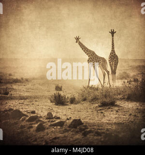vintage image of giraffes in amboseli national park, kenya - Stock Photo