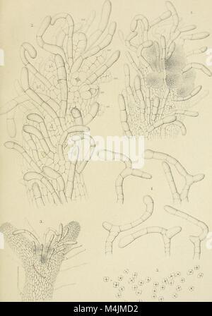Annales du Jardin botanique de Buitenzorg (17785995334) - Stock Photo