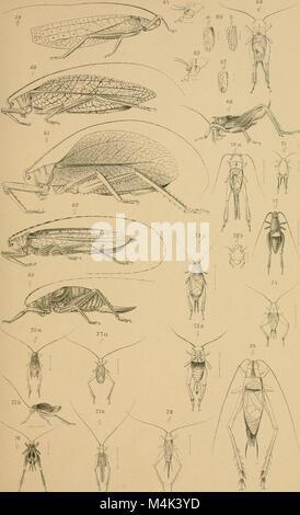 Annali del Museo civico di storia naturale di Genova (1893) (18224777189) Stock Photo