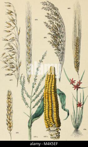 Atlante botanico; secondo il sistema naturale di De Candolle; 85 tavole miniate con testo esplicativo ridotto a - Stock Photo