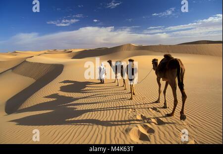 Algeria. Near Timimoun. Western Sand Sea. Grand Erg Occidental. Sahara desert. Bedouin walking with camels. Camel - Stock Photo
