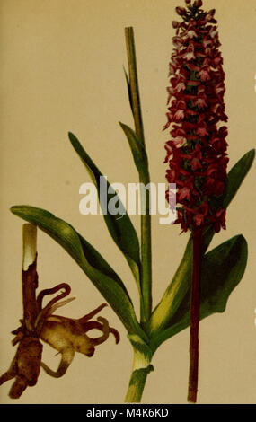 Atlas de la flora alpine (1899) (20155529110) Stock Photo