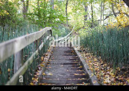 Wooden stairs with leading lines in the fall surrounded by green foliage - Stock Photo