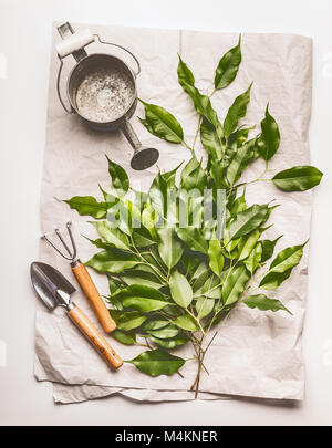 Watering can with gardening tools and green bunch of twigs on paper  and desk background, top view - Stock Photo