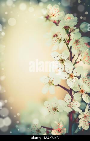 Pretty spring blossom floral frame - Stock Photo