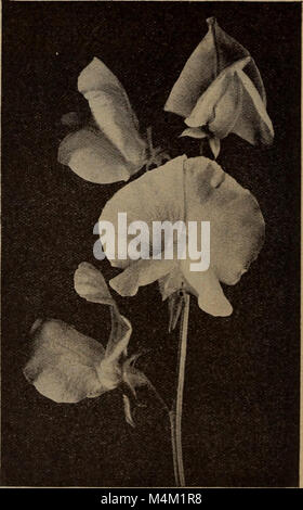 Barnard's seeds, bulbs, shrubs 1919 (1919) (20327860266) - Stock Photo