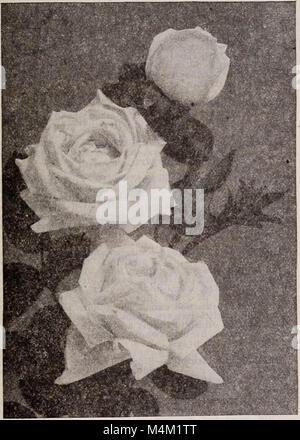 Barnard's seeds, bulbs, shrubs 1922 (1922) (20327897436) - Stock Photo