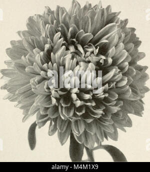 Barnard's wholesale price list - vegetable and flower seeds 1918 (1918) (20167043239) - Stock Photo