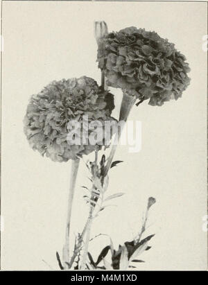 Barnard's wholesale price list - vegetable and flower seeds 1918 (1918) (20359796591) - Stock Photo