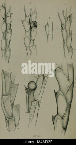 Annals and magazine of natural history - including zoology, botany and geology (1851) (17790860803) - Stock Photo