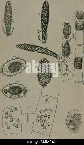Annals and magazine of natural history - including zoology, botany and geology (1853) (18225397449) - Stock Photo