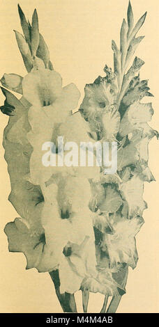 Beckert's seed store - vegetable seeds flower bulbs (1930) (20334093096) - Stock Photo