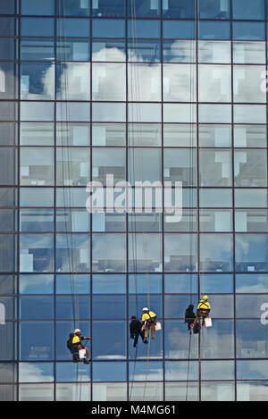 Window cleaners abseiling down glass skyscraper - Stock Photo