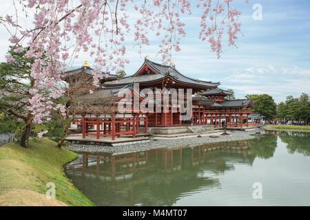 Byodo-in Temple in Uji, Kyoto, Japan during spring. Cherry blossom in Kyoto, Japan. - Stock Photo